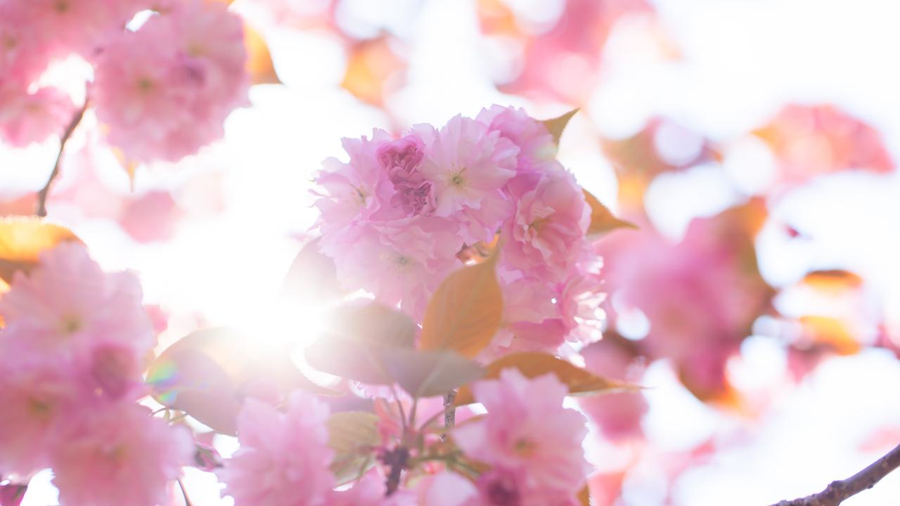 Der Frühling ist in Bestform - bis zu 21 Grad in Köln