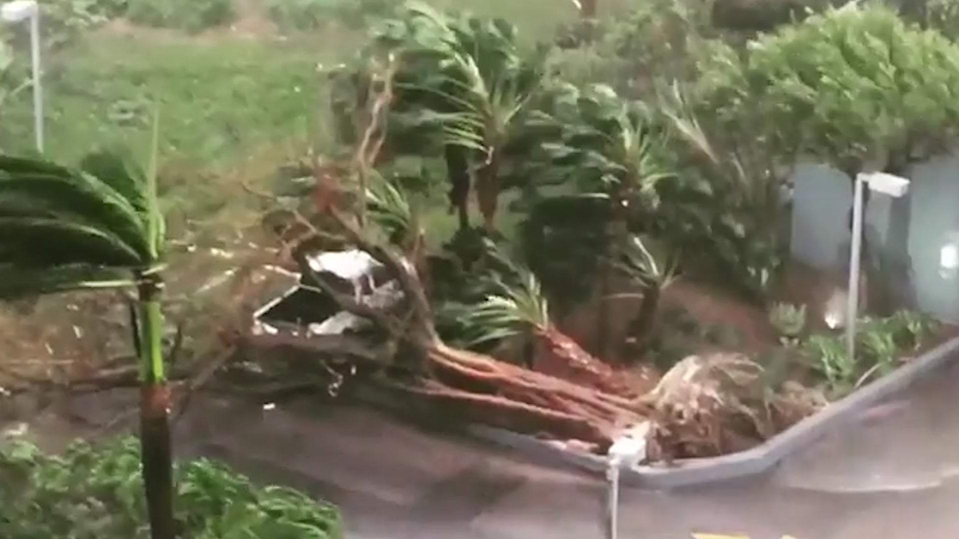 irma winds uproot trees in miami