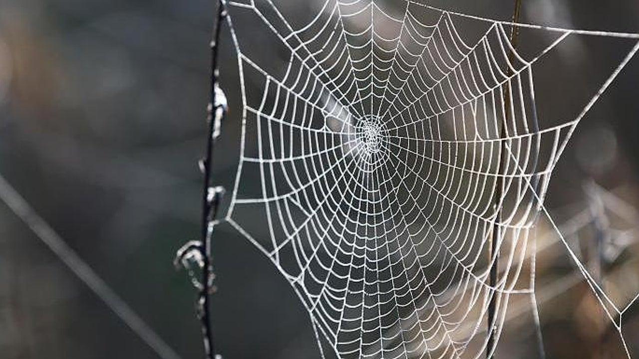 In chinesischem Regenwald: Wissenschaftler entdeckt bisher unbekannte Spinnenart