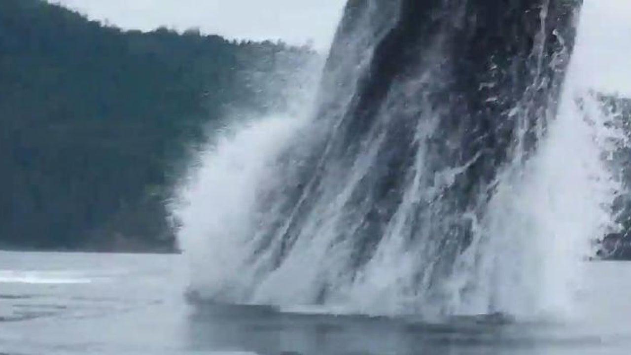 Buckelwal schießt direkt neben Kajakfahrerin empor