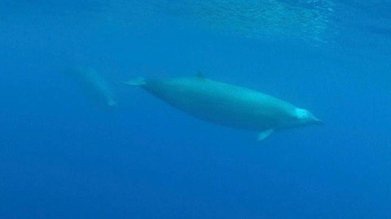 True-Wal erstmals auf Video zu sehen
