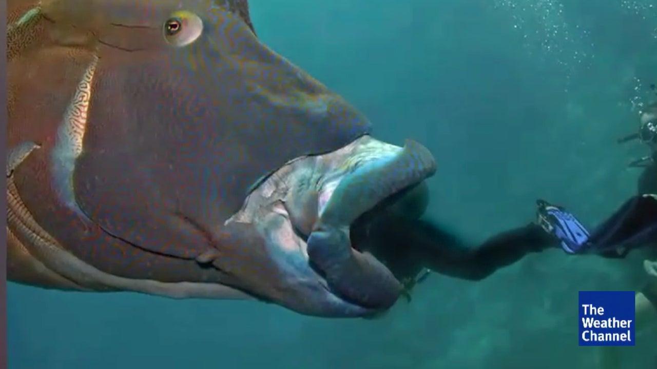 Hatte dieser Fisch genug vom Rummel um ihn?