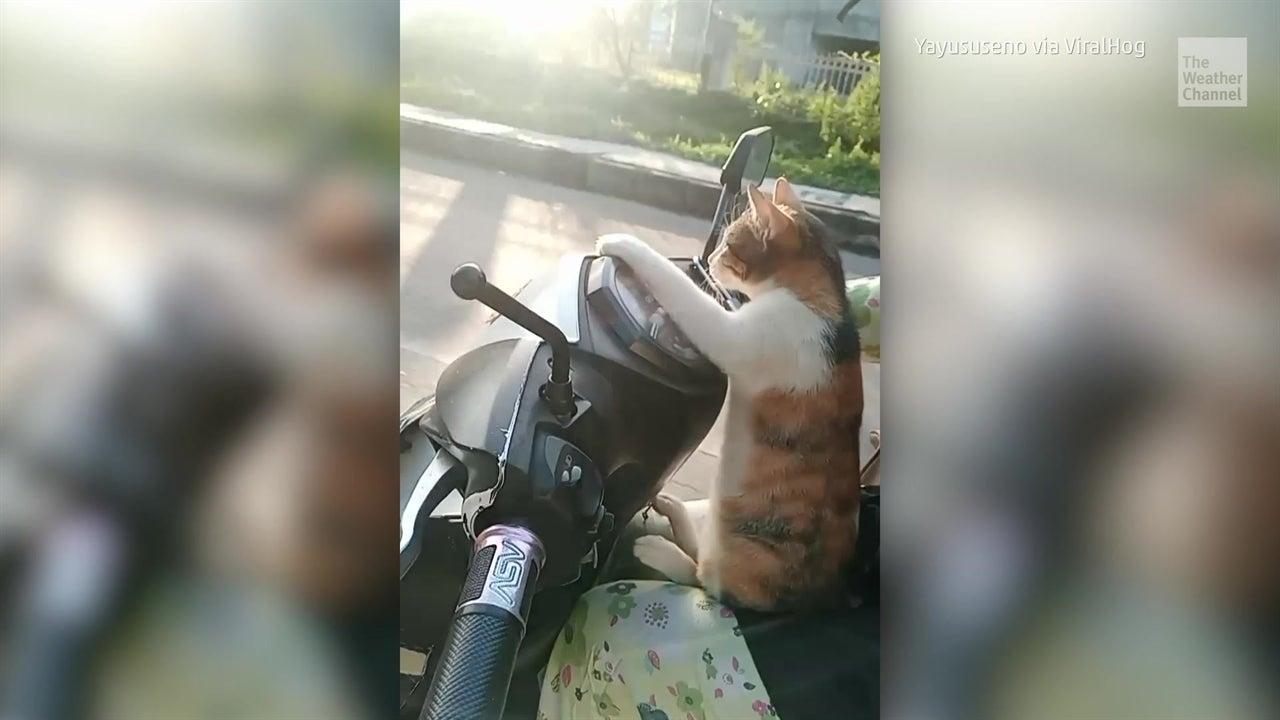Moped-Katzen und Trampolin-Hunde: Die besten Tiervideos der Woche