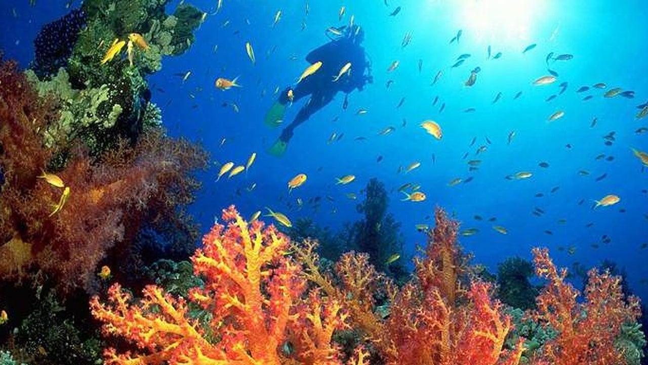 Totgeglaubtes Korallenriff erwacht zum Leben
