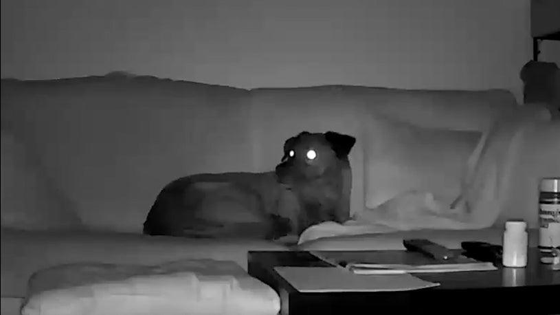 Dog Senses Utah Earthquake Before it Happens