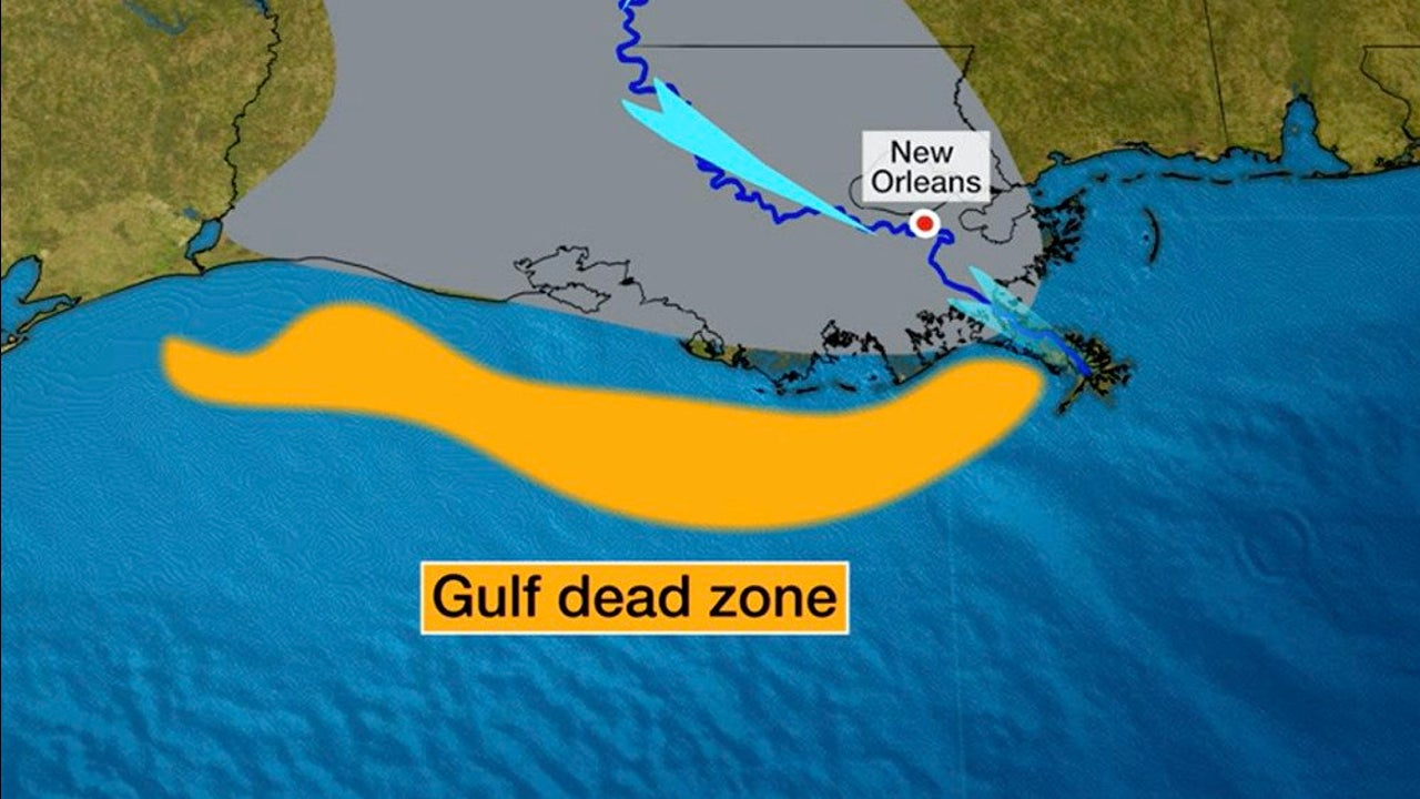 Gulf of Mexico Dead Zone Likely to Be Average-Sized This Year
