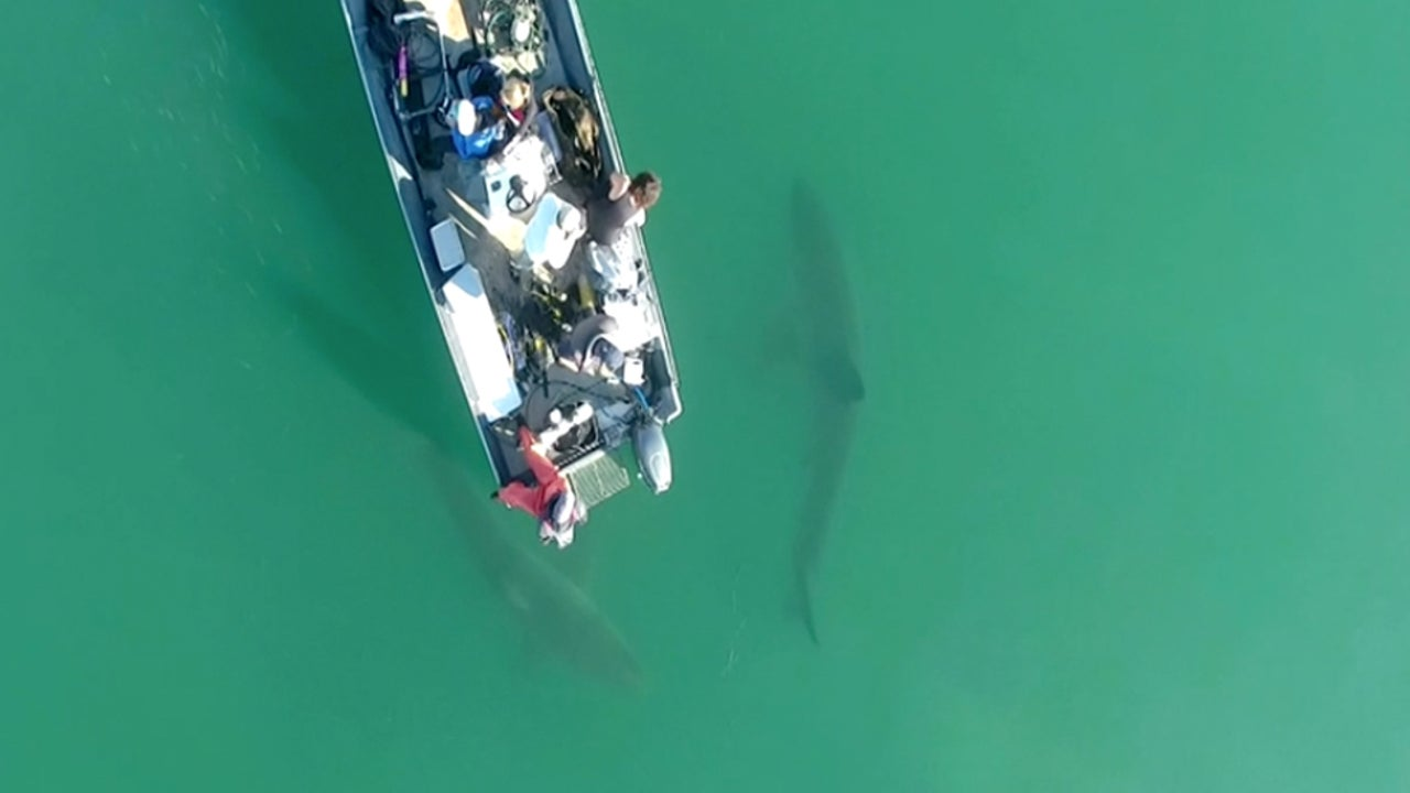 No Great White Shark Sightings in False Bay, South Africa, This Year