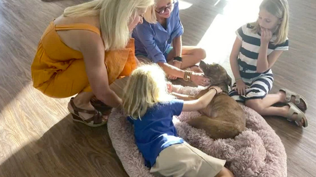 'Miracle' Dog Found in Hurricane Dorian Debris Adopted