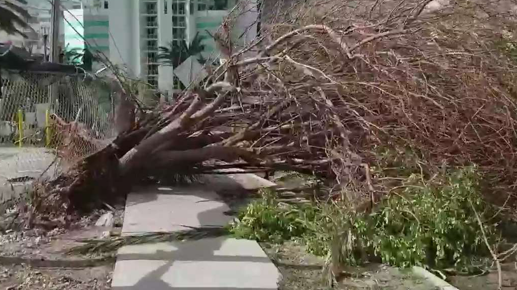 How to Keep Your Trees from Falling During a Storm