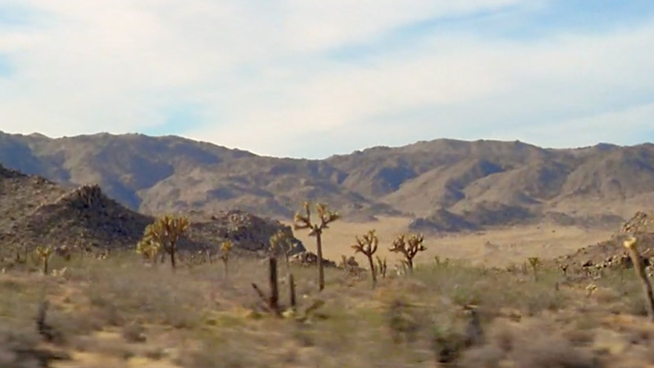 Damaged Joshua Tree National Park Could Take Hundreds of Years to Recover