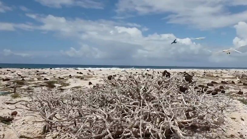 Plastic Pollution Plagues Seabird Sanctuary of Hawaii's Midway Atoll