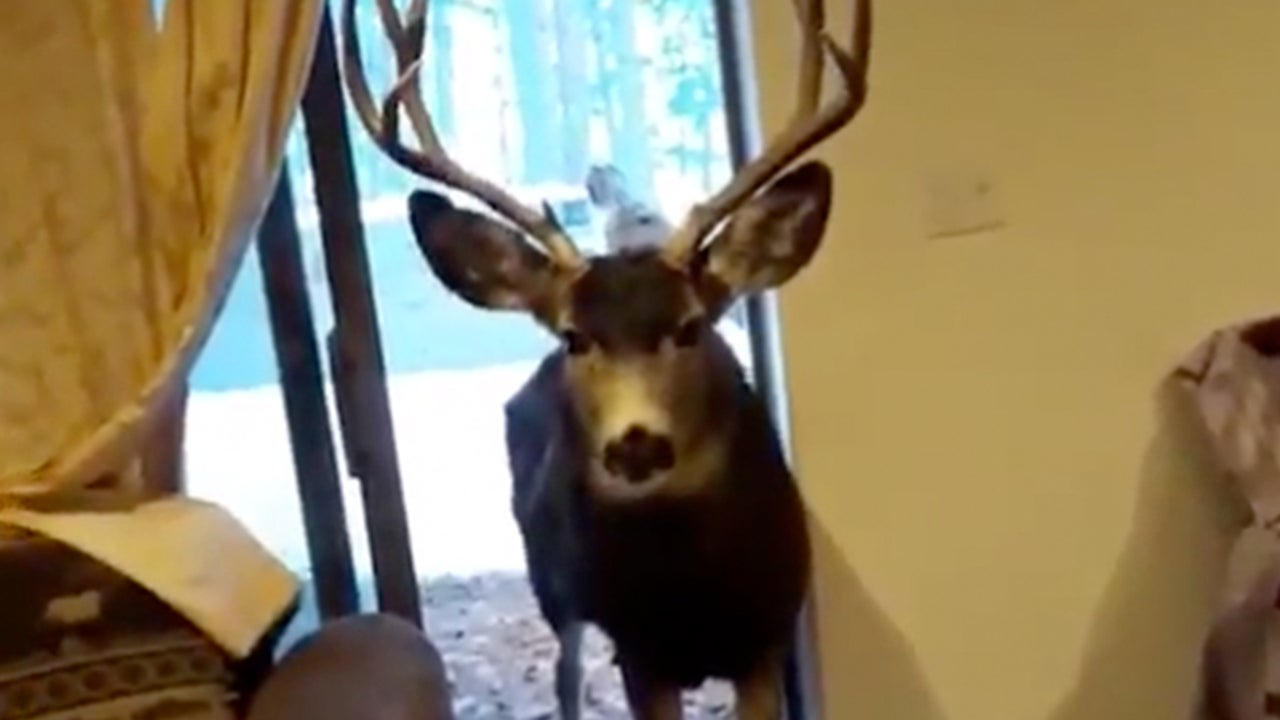 Colorado Authorities Warn Residents to Keep Deer Out of Homes