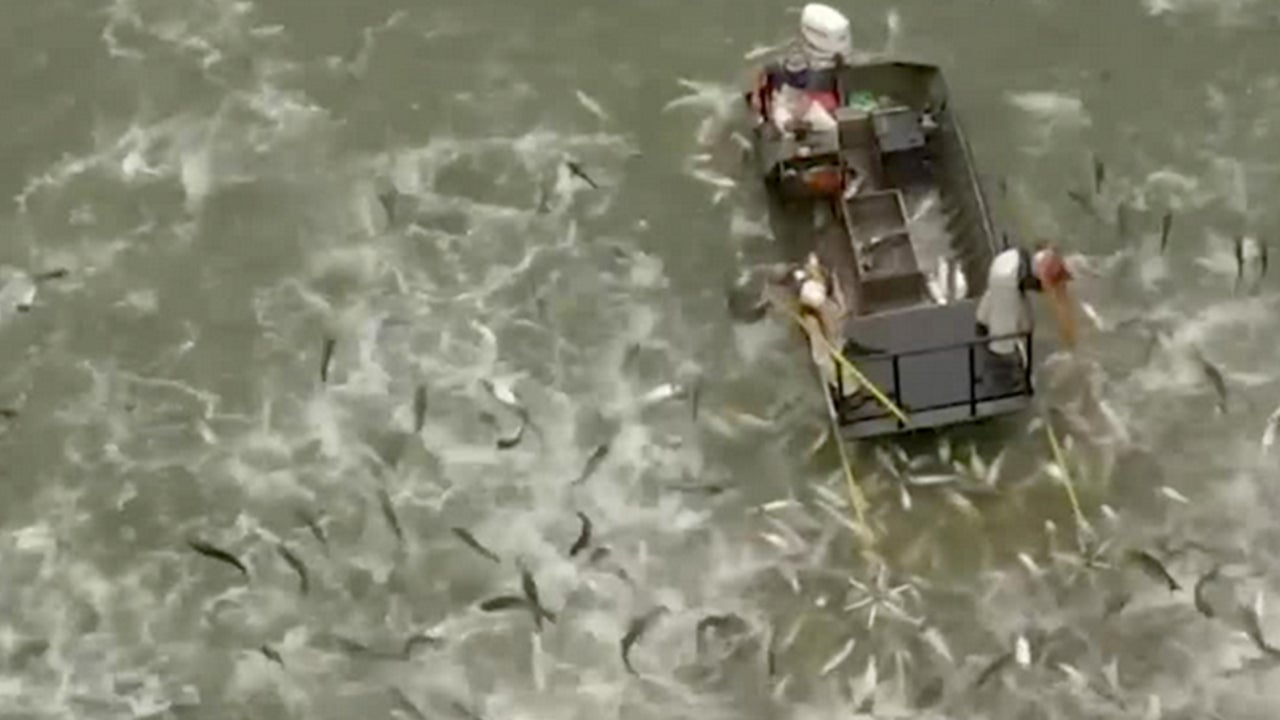 Shocking Solution to Asian Carp Problem in Kentucky