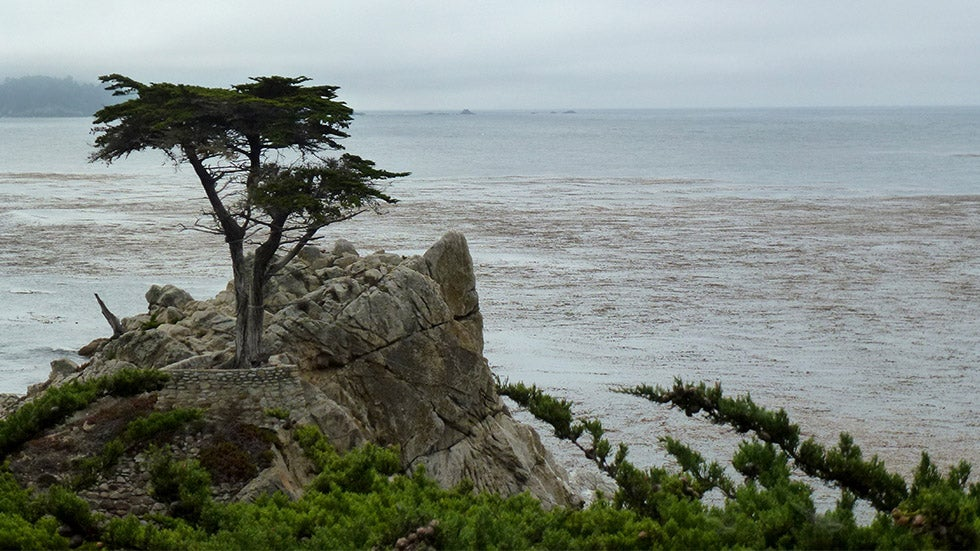 Pebble Beach's Iconic 'Lone Cypress' Damaged in California Storm