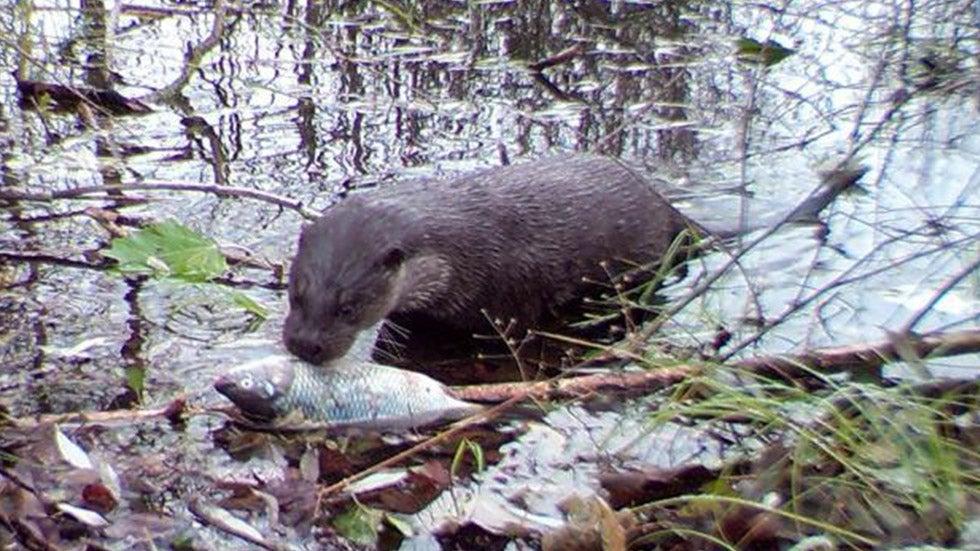 Wildlife Making Comeback Around Chernobyl Nuclear Site