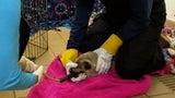 Coronavirus Could Hamper Efforts to Help Marine Animals in Need