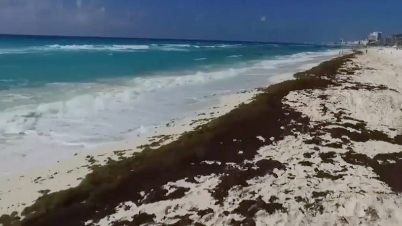 Tons of Algae Fouling Mexico Beaches | The Weather Channel