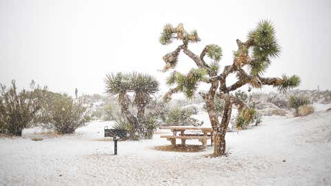 Los Angeles-based photographer, Camille Aligue, found herself in the right place at the right time. During a weekend trip to Joshua Tree in southern California, she was able to capture stunning photos of a snowed-in desert. (Camille Aligue, camillegracephoto.com)