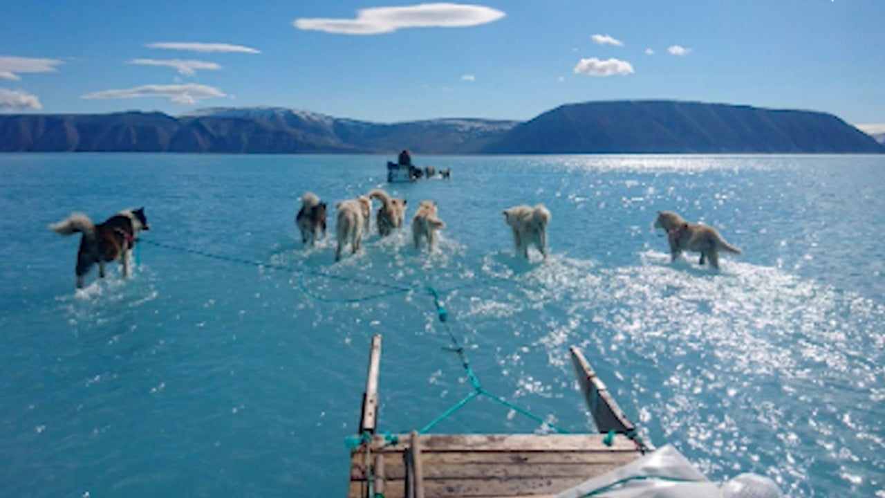 Ice Melt Leaves Sled Dogs in Water
