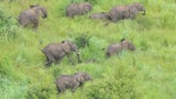 Mozambique's Niassa Reserve Goes Full Year Without One Elephant Poached