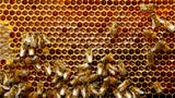 Beekeepers Report Stunning Colony Declines in Worst Winter on Record