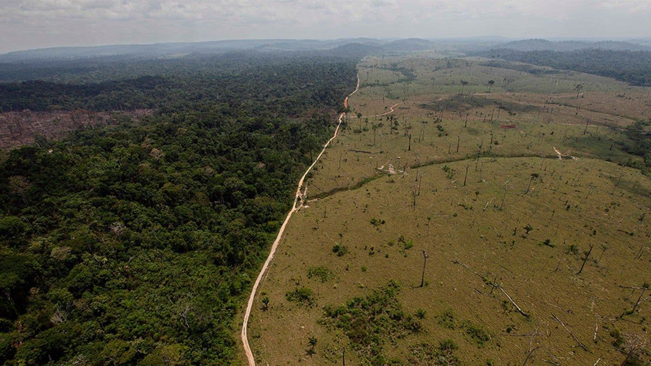Deforestation, Climate Change Spell Disaster for Amazon