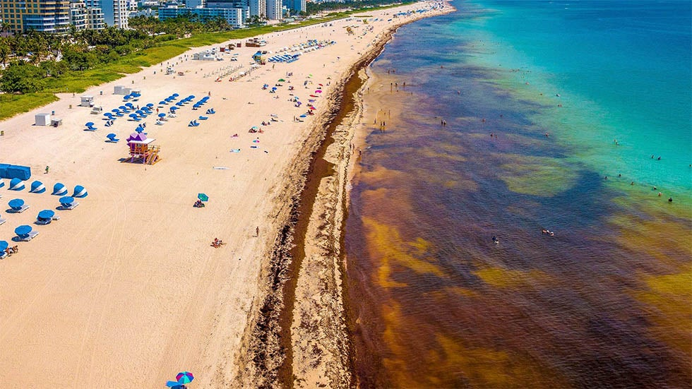 huge sargassum seaweed blooms again threaten florida  caribbean and mexico
