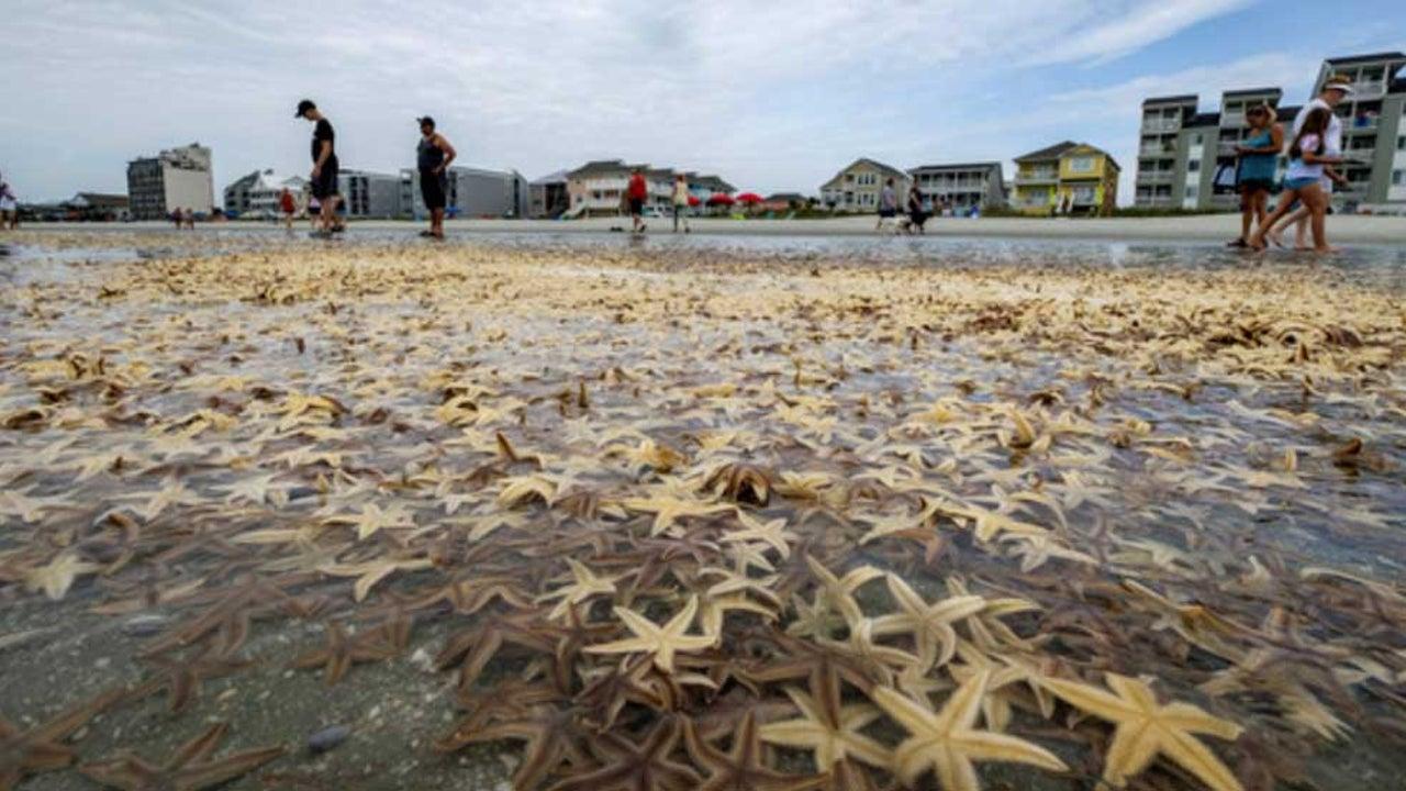 Watch: Starfish Wash Up on Myrtle Beach, South Carolina