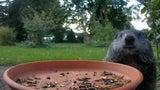 Wildlife Cam Captures Best of Backyard Nature