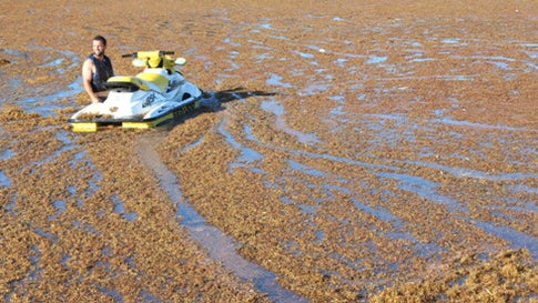 Slimy, Stinky Sargassum Piles up on Florida Beaches
