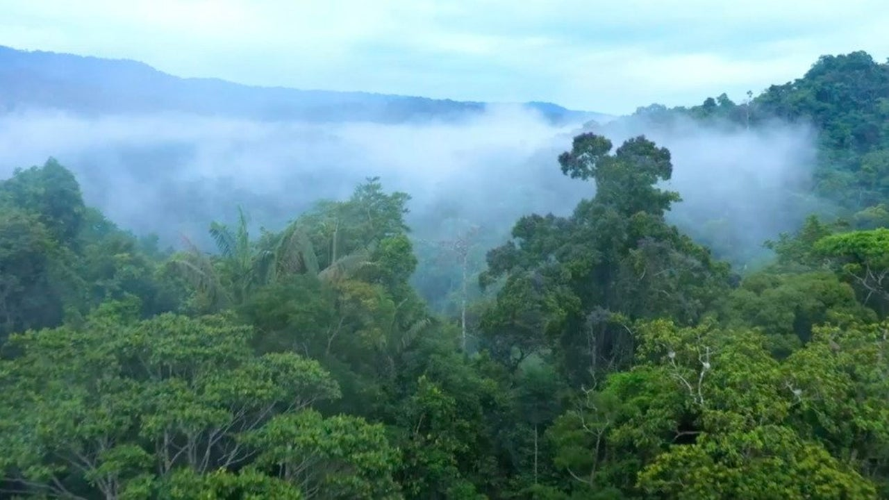 Amazon Emitting More CO2 Than It Absorbs