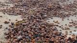 Ladybugs Blanket Popular Beach