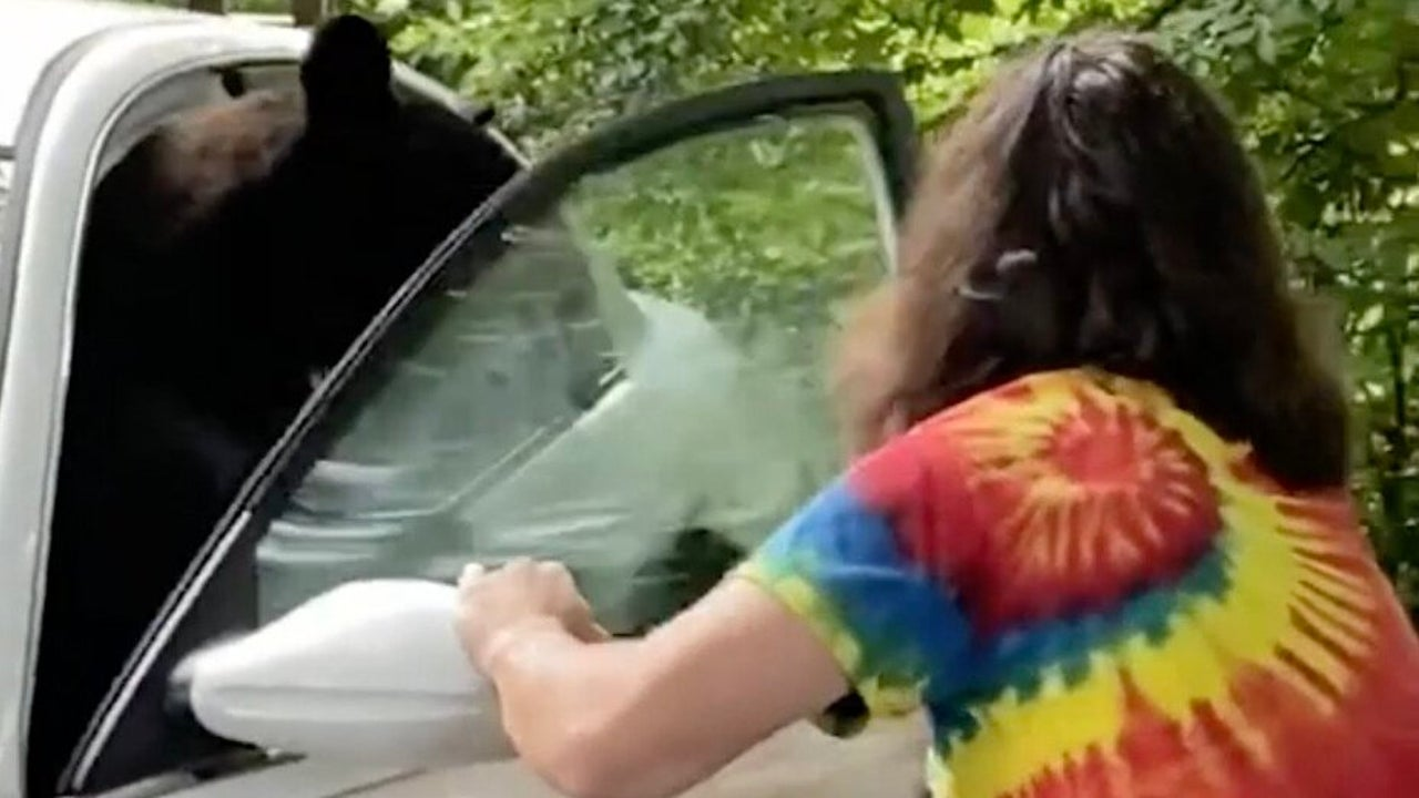 How to Get a Bear Out of Your Car