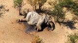Hundreds of Elephants Found Dead of Mystery Illness in Botswana