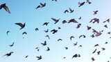 3 Billion Birds Missing from North American Skies
