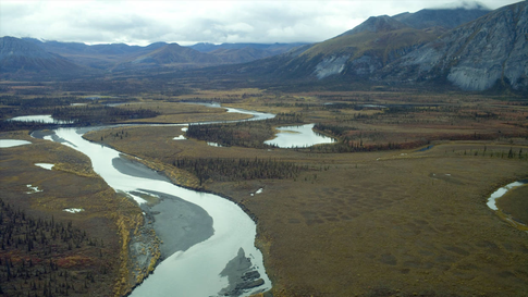Drilling, Climate Change Could Cause Extinctions in Alaska National Wildlife Refuge, Federal Report Says