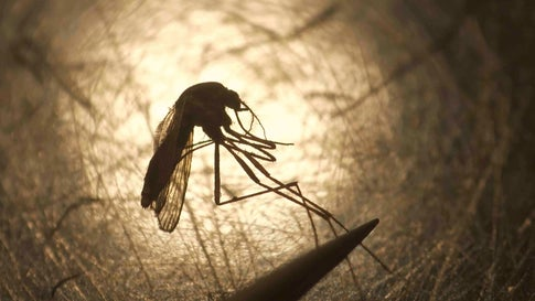 Mosquito-Borne EEE Outbreak Hits Parts of U.S. in Record Numbers