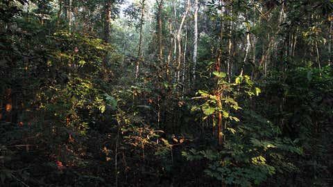 Los orígenes de los bosques tropicales modernos, como el del Parque Nacional Amacayacu en Guaviare, Colombia, se remontan a la caída de un asteroide que provocó la extinción masiva a finales del Cretácico, hace 66 millones de años.  (MAYELA LOPEZ / AFP a través de Getty Images)