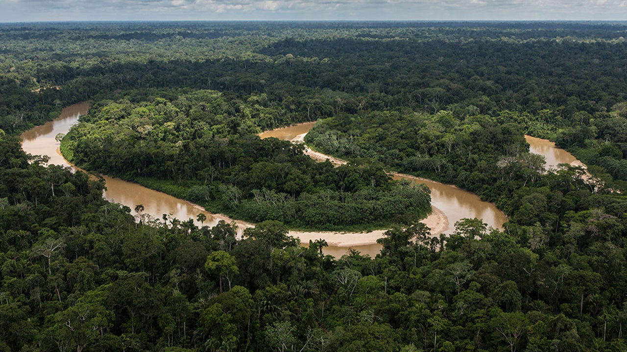 Tropical Forests Losing Ability to Soak Up Carbon Dioxide, Study Finds