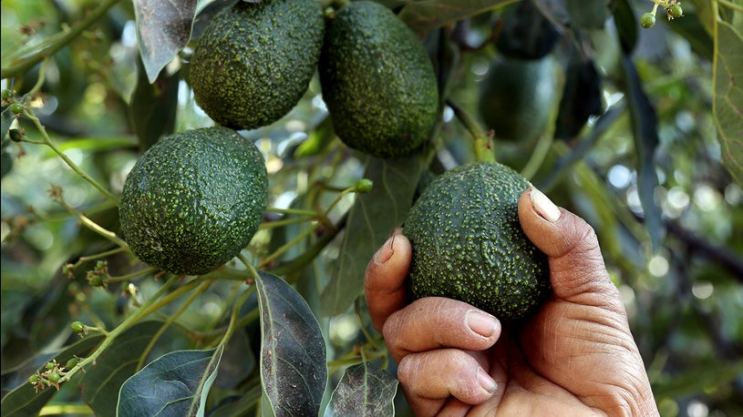 High Avocado Prices Prompt Restaurants to Create Faux Guac