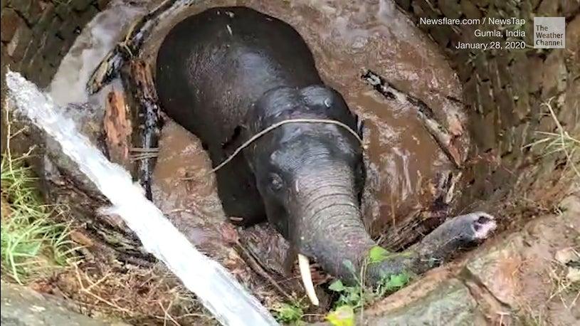 Elefant fällt in Brunnen - Inder haben geniale Lösung
