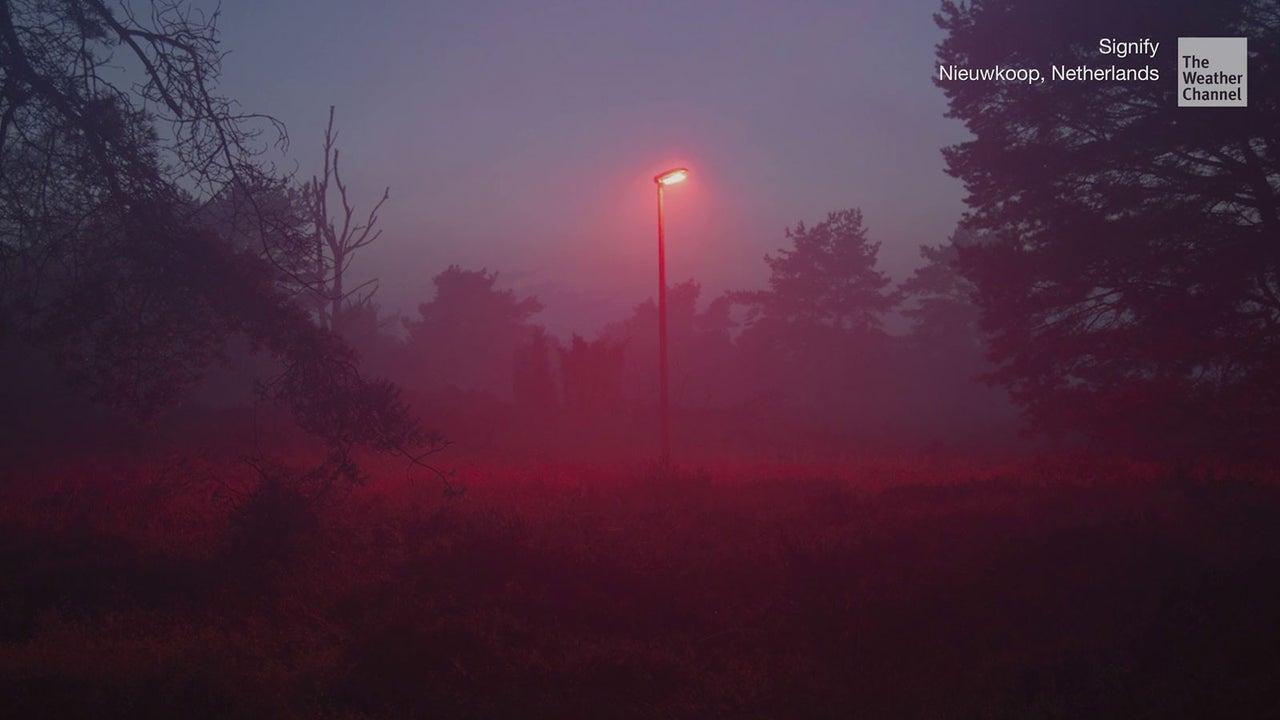 Eine Gemeinde in den Niederlanden hat seine Straßenbeleuchtung auf Rotlicht umgestellt - den Fledermäusen zuliebe.
