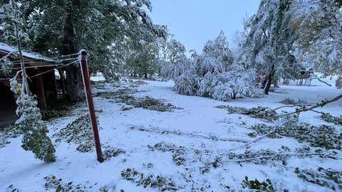 Branches are scattered on a property in Hyrum, Utah, on Oct. 12, 2021, after snow pounded the area. (Twitter/@smackdowntay)