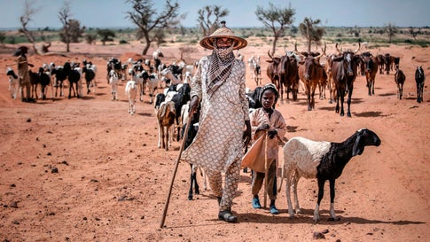 A nomadic Fulani man and his son walk with their cattle on the way to Nigeria in a remote area near Maradi, Niger on July 29, 2019. In the African Sahel, located between the Sahara Desert and the equator, the climate has long been inhospitable, but now rising temperatures have caused prolonged drought and unpredictable weather patterns, exacerbating food shortages, prompting migration and contributing to instability in countries already beset by crisis. (Luis Tato/AFP/Getty Images)