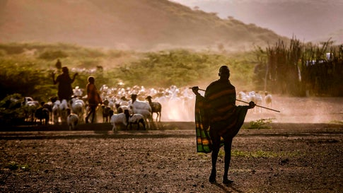A member of the Turkana pastoralist community walks towards his house next to his cattle in the early morning in an arid dry area in Morungole, Turkana County, Kenya on October 3, 2019. - Turkana is a vast, dry area in the north-west of Kenya that is on the frontline of climate change. With regular searing temperatures the Turkana people are suffering from recurring and prolonged droughts. (Photo by Luis TATO / AFP) (Photo by LUIS TATO/AFP via Getty Images)