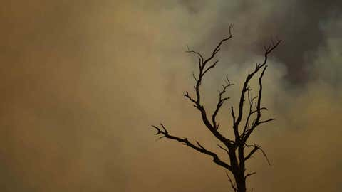 TUMURUMBA, AUSTRALIA - JANUARY 11: A dead tree is set against bushfire smoke on January 11, 2020 in Tumburumba, Australia. Cooler temperatures forecast for the next seven days will bring some reprieve to firefighters in NSW following weeks of emergency level bushfires across the state, with crews to use the more favourable conditions to contain fires currently burning. 20 people have died in the bushfires across Australia in recent weeks, including three volunteer firefighters. About 2079 homes have been destroyed this bushfire season in NSW, more than half of them since January 1, and 830 homes have been damaged. (Photo by Sam Mooy/Getty Images) (Photo by Sam Mooy/Getty Images)
