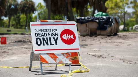 ST PETERSBURG, FL - JULY 21: A sign is posted for depositing dead marine life from the Red Tide bacteria into dumpsters, is seen at Maximo Park on July 21, 2021 in St Petersburg, Florida. Red tide, which is formed by a type of bacteria, has killed several tons of marine life in Florida so far this year.  (Photo by Octavio Jones/Getty Images)