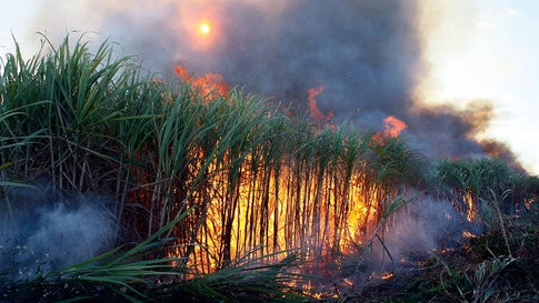 A sugar cane field is burned in Clewiston, Florida, in 2008. (Joe Raedle/Getty Images)
