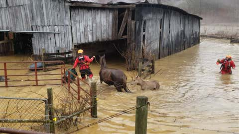 A Rough Terrain Rescue crew takes mares and foals from a flooded barn on Sunday, February 28, 2021, in Elliott County, Kentucky. (Facebook/Rough Terrain Rescue)
