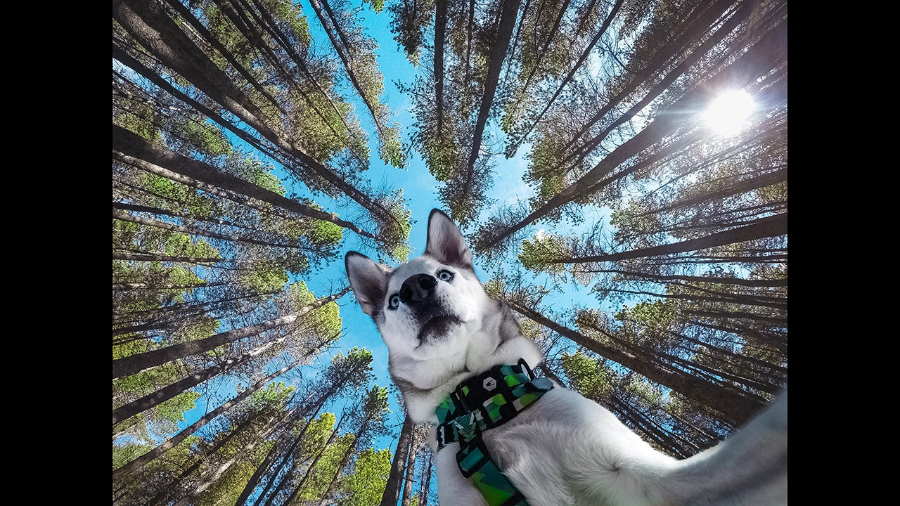 Frank Pantely's Instagram @Im_Gonna_Be_Frank started out with photos of landscapes, wildlife and the the night sky, but he quickly learned that photos of his first husky, Bear, got the most attention. His account is now dedicated to not one, but three of his pups: Bear, 3, Zella, 2.5 and Grizz, 1.